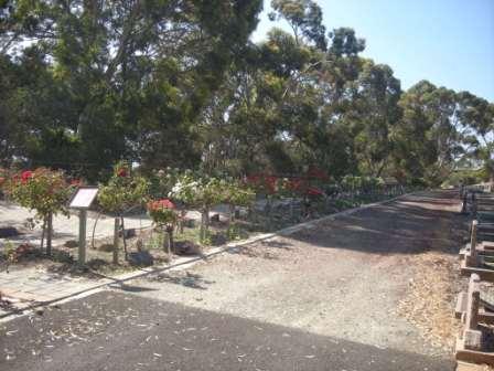 Cemetery Rose Garden
