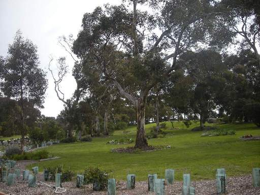 Cemetery Family Tree Section