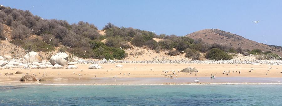 Wright Island